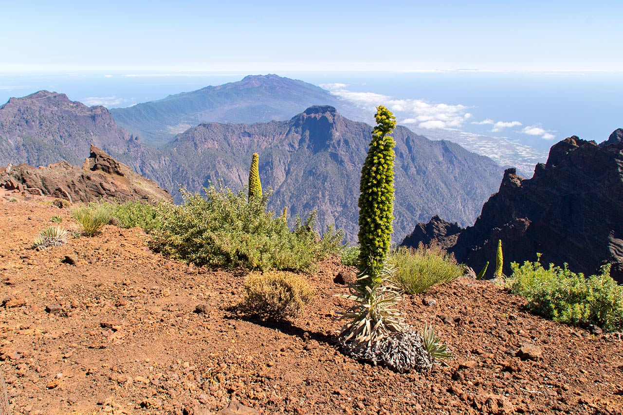 Trayectos habituales en taxi del norte de La Palma. Desde Los Sauces hasta El Roque de Los Muchachos · Taxi en La Palma.